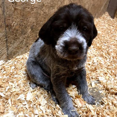 4 Weeks Old - George