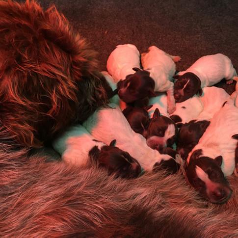 newborns_LG.jpg