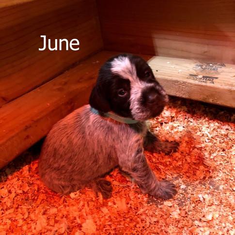 June - 3 Weeks Old