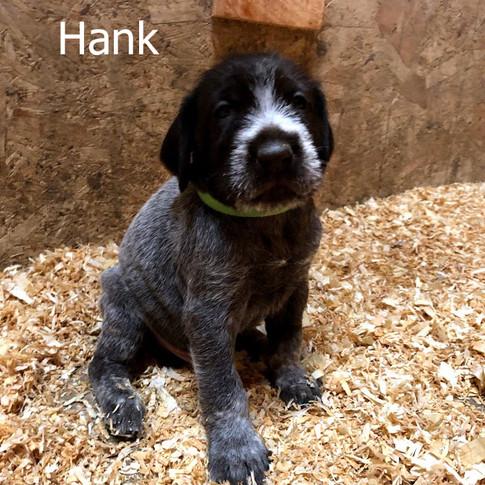 4 Weeks Old - Hank