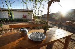תה צמחים מגינת התבלינים בחאן תמרים