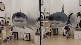 Google 3D Animals In Your Home