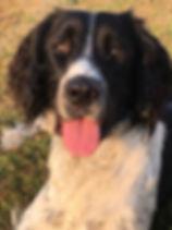 Nautic,chien médiateur