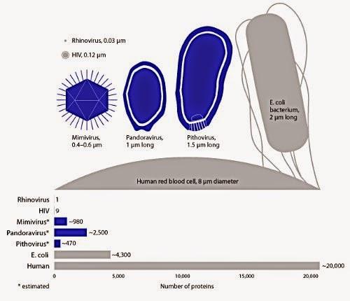 Comparación entre bacterias y virus gigantes