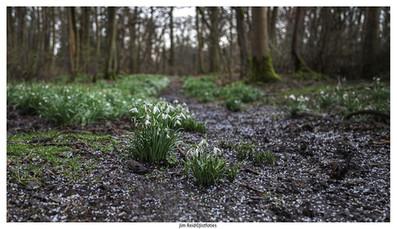 Snowdrops End