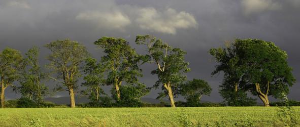 Rain on the Way near Ratho