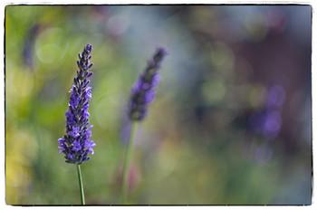 Lavender Soviet style_079_A_Proj.jpg