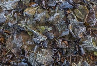 Forest Floor in Winter