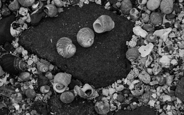 Shells and Stone Blackness
