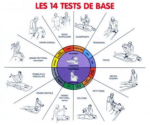 TEST MUSCULAIRE kinesiologie.png