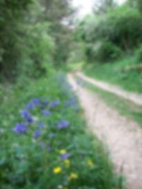 chemin de vie Mon ekilibre kinésiologie  kinésiologue Quimperlé peur phobie anxiete bien etre calme serenite depression stress deprime Lorient