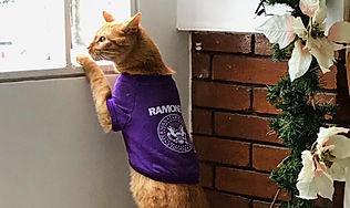 Camiseta para gato