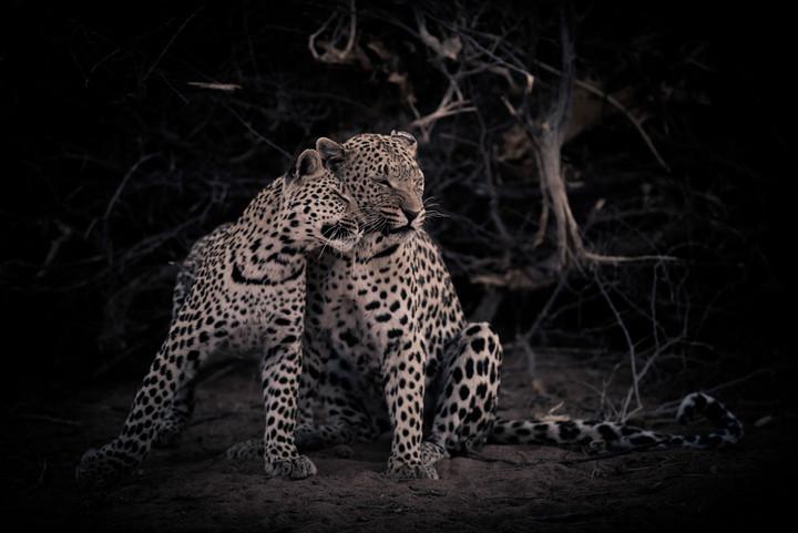 Cats of AfriCat