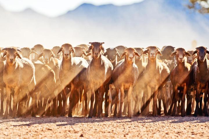 Die Schafe von Namtib