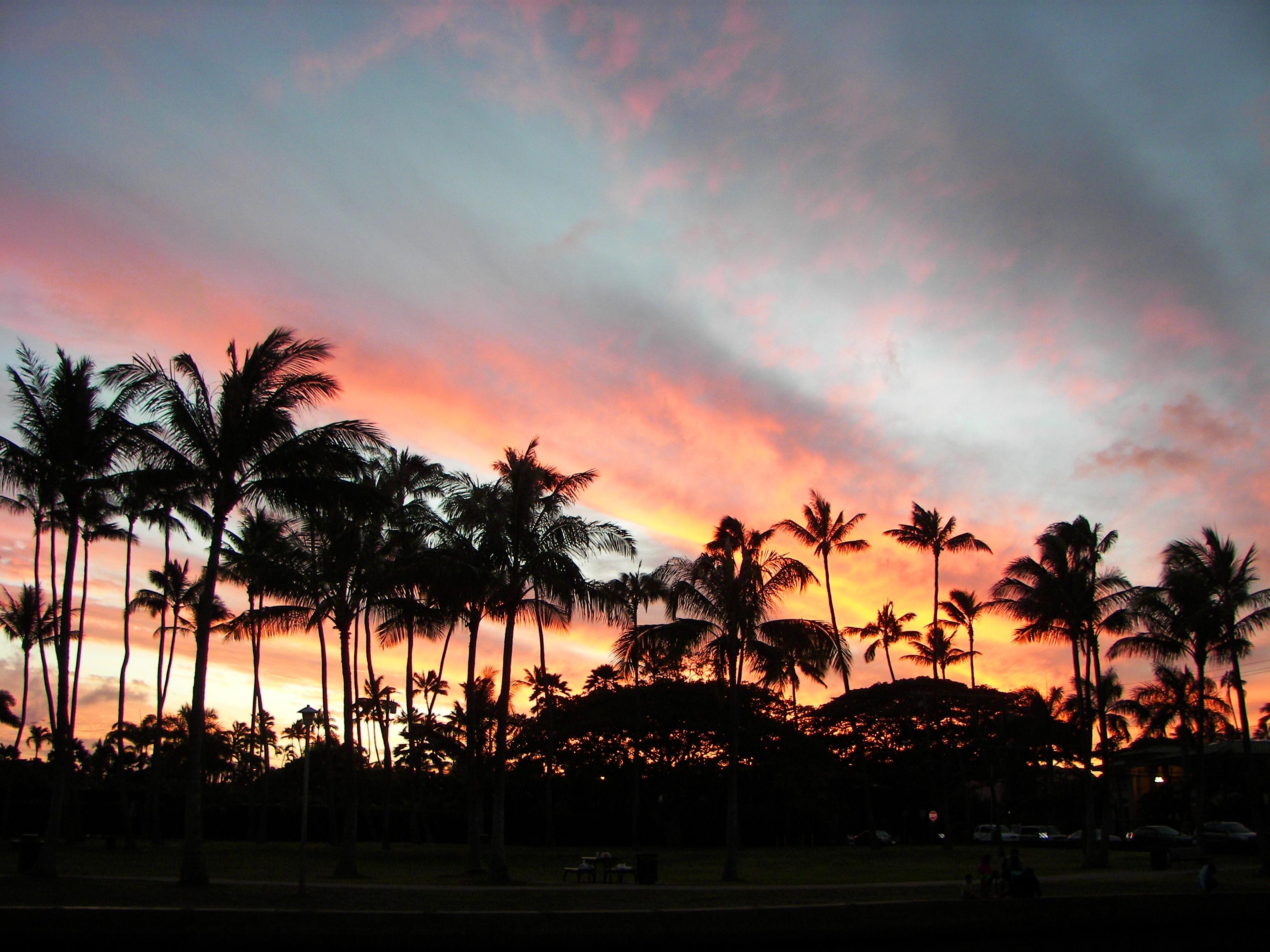 Palm Trees Sunset - Kaimuki, Oahu