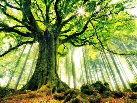 Le pouvoir des arbres