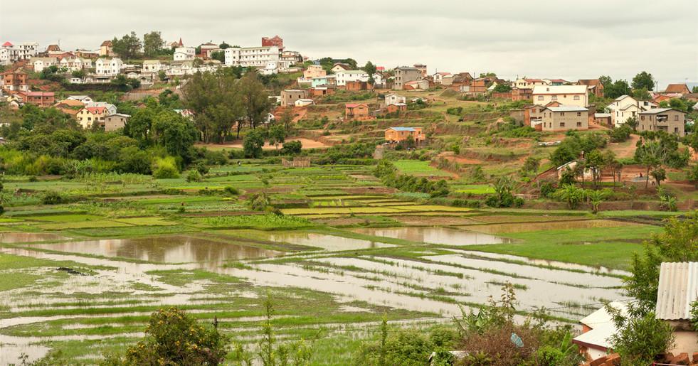 Reis ist das Hauptprodukt im zentralen Hochland und auch in und um Ambodivoanjo ist die Landwirtschaftsfläche damit bedeckt.