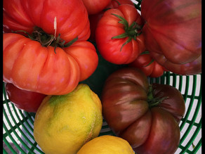 From heart to skin - the benefits of tomatoes