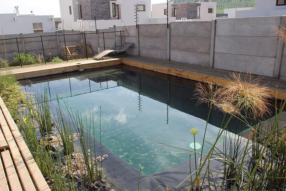 Bioantu piscinas naturales humedales depuradores de for Piscinas naturales chile