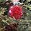 Thumbnail: Plastic Ornament