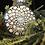 Thumbnail: Plastic Mandala Ornament