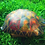 "Thumbnail: Handpainted Turtle ""shell"""