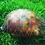 "Thumbnail: Handpainted Turtle ""shell"""