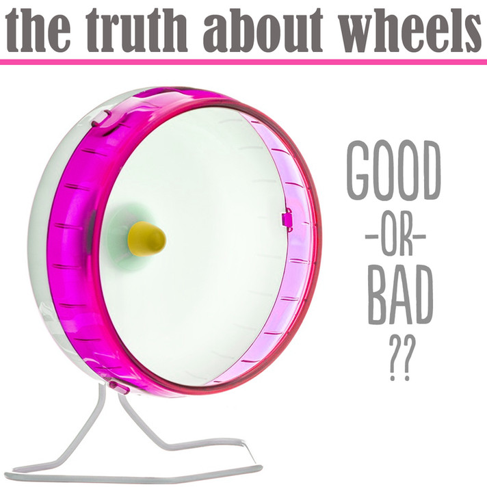 The Truth About Rat Wheels