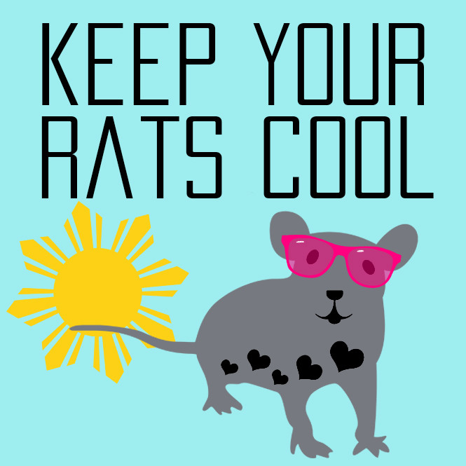 Keep Your Rats Cool During The Summer