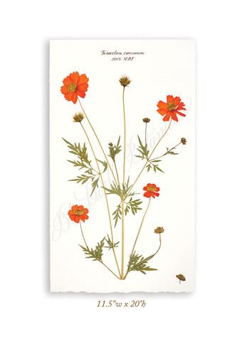 bbotanicals9362_webretouched.jpg