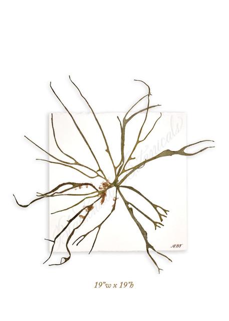bbotanicals9390_webretouched.jpg