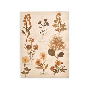 Antique Specimens