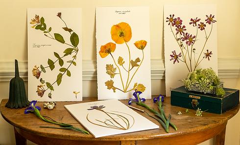 Herbarium Option 1.png