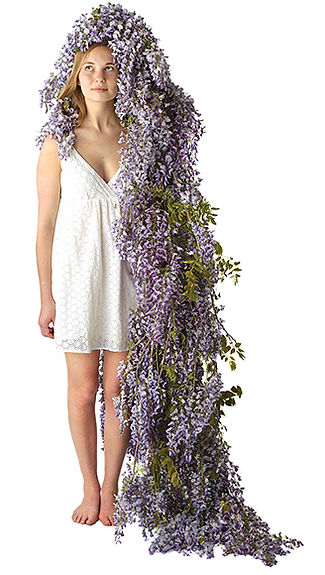 Wisteria_retouched.png