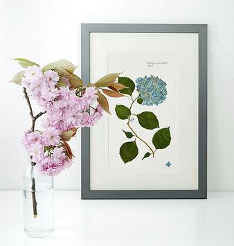 botanical-mockup.jpg