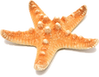 toppng.com-starfish-png-597x470.png