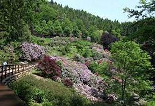 oasi zegna - Shinrin Yoku - Forest bathing