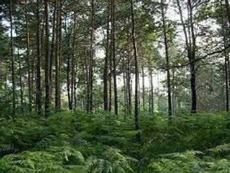 lombardia - Shinrin Yoku - Forest bathing