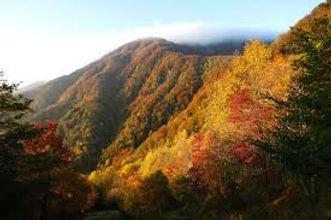 emilia-romagna - Shinrin Yoku - Forest bathing