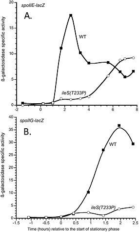 spo graph 1.jpg