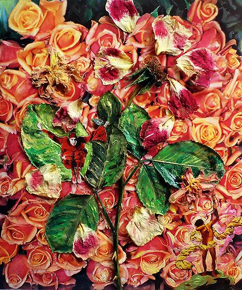Grebe, El Reino de la Rosa, 34x37