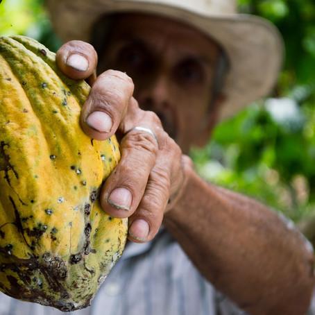 El poder del Cacao