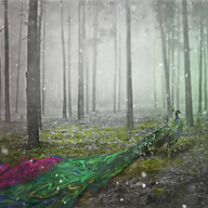 Creative Forest