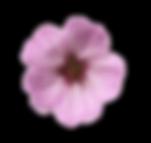 trobentica-vijolična-icon2.png