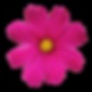 roza-vijolicna-icon2.png