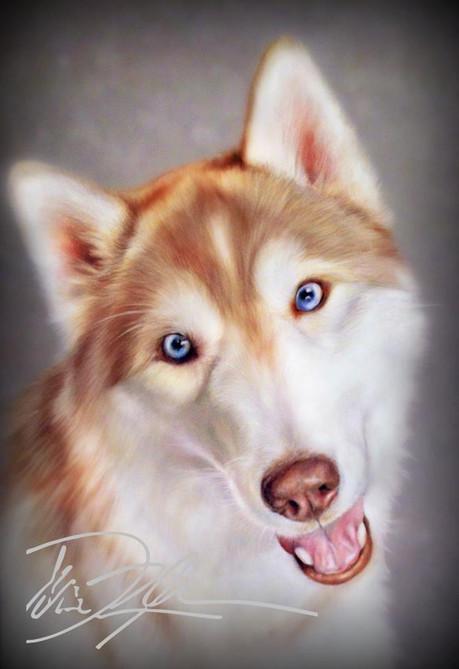 Husky Pet Portrait
