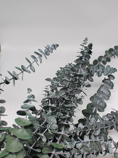 "Infinity Eukalyptus ""Baby Blue"""