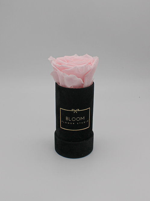 Infinity Box Baby Velvet - Baby Rose