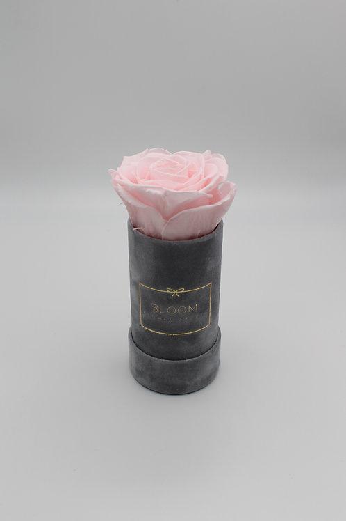 Infinity Box Grey Velvet - Baby Rose