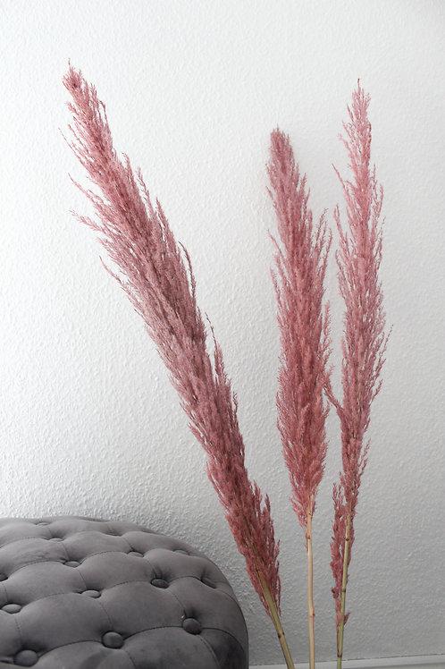 Pampas rosé